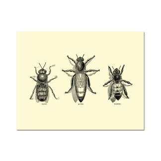 Vintage Honey Bee Note Card