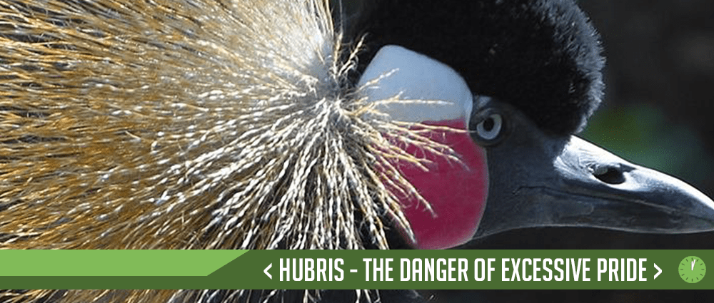 Hubris – The Danger of Excessive Pride