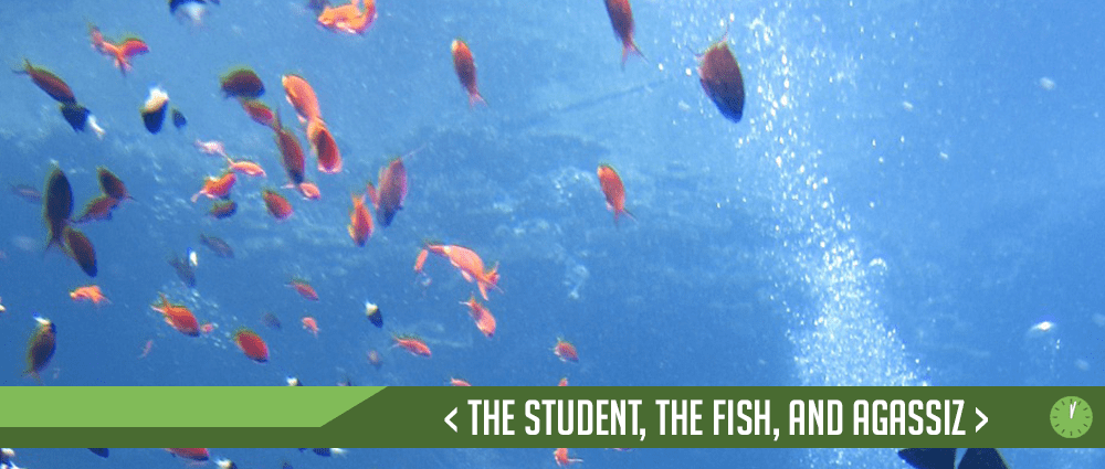 The Student, The Fish, and Agassiz