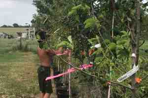 Expert Gardening How-to; Start a Fruit Orchard – Easy DIY
