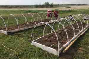 Expert Garden Tip; Strawberry Bed Protection