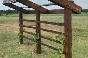 Expert How-to; Build a Beautiful & Simple Grape Arbor