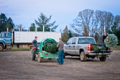 wpid17619-Cutting-Christmas-Trees-on-the-Family-Farm-14.jpg