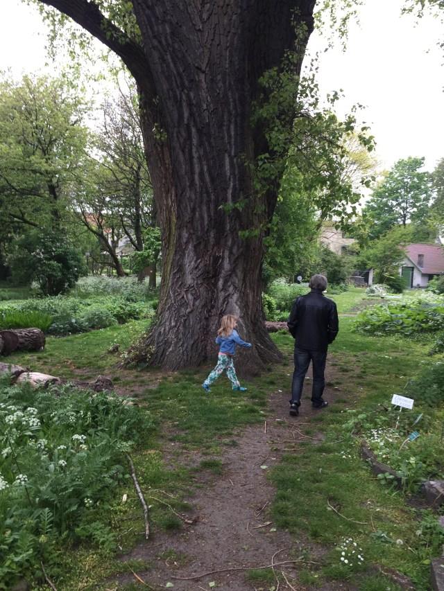 dikke-boom De Tuin van Kina