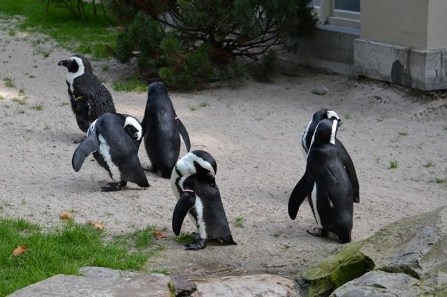 pinguins De Zoo van Antwerpen - by day deze keer