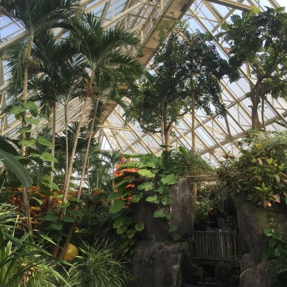 Pacific Island Water Garden