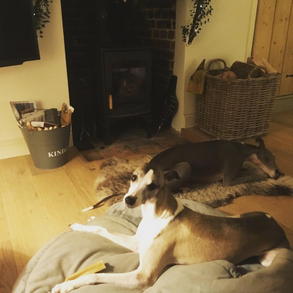 dog friendly cottages in Norfolk
