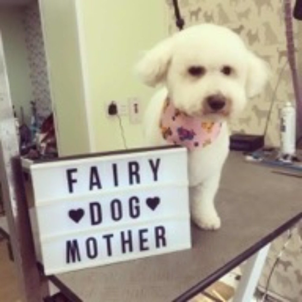 FairyDogmother