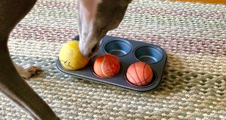 Scent Games for Dogs- Ideas and Activities: