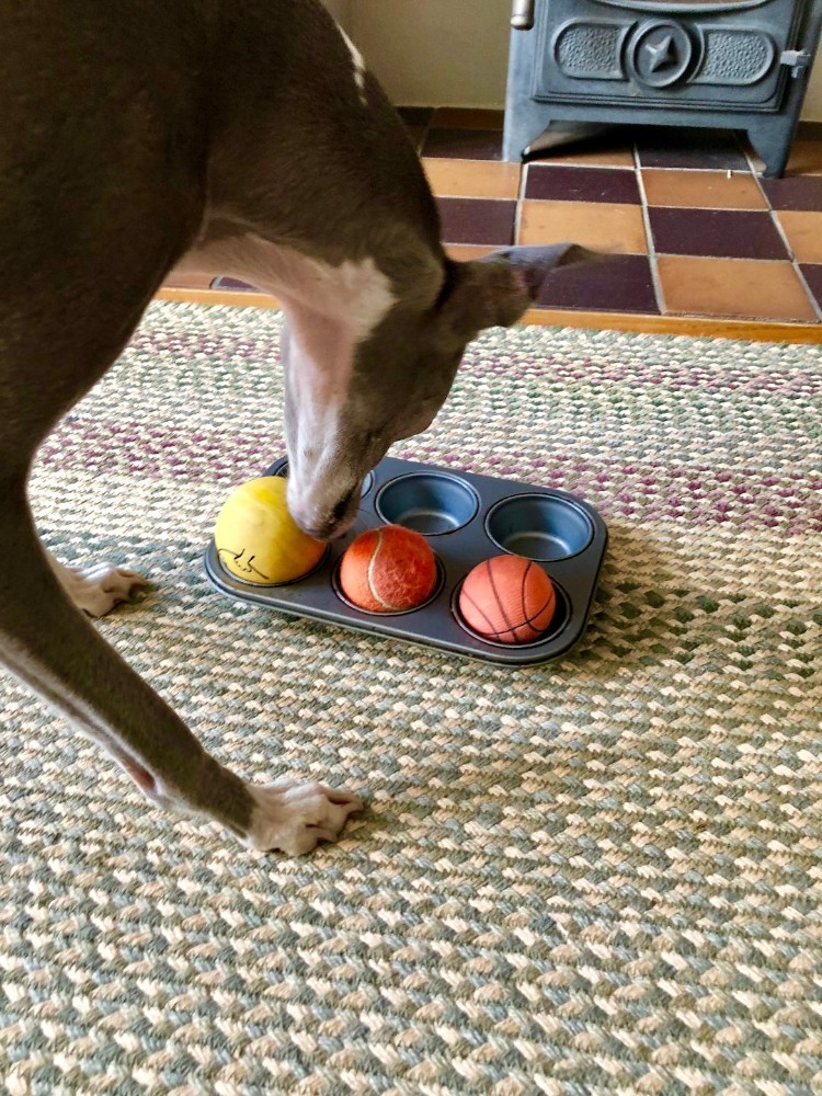 scent games for dogs