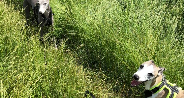 Top Tips to Finding a Fabulous Dog Walker
