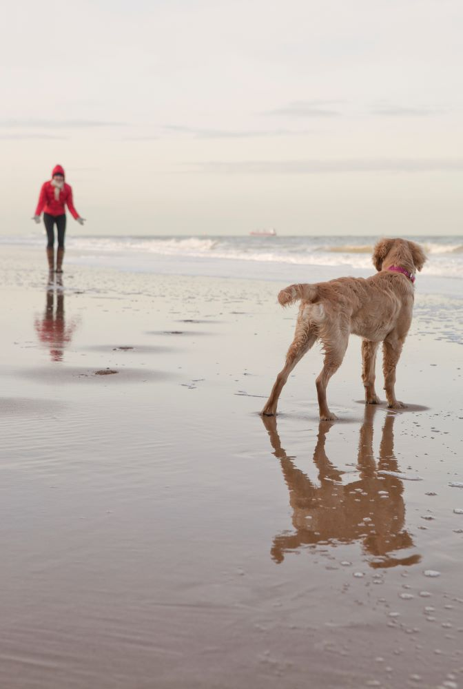 How Dog Ownership can Help Our Health