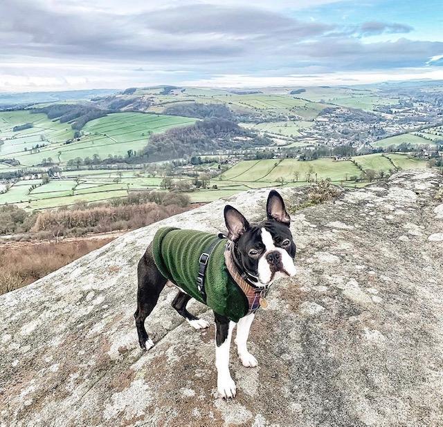 dog friendly Derbyshire