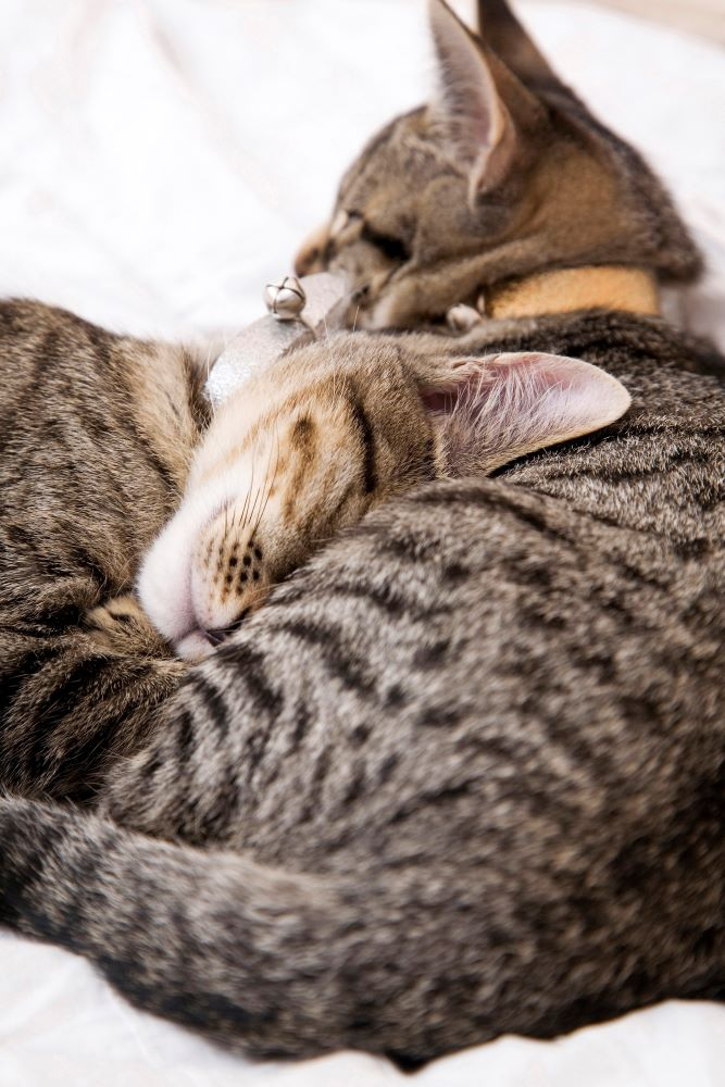 Why Spending Time With Your Pets Is So Important