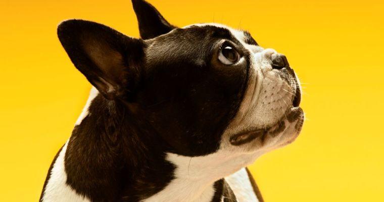 Tips to Avoid Dog Obesity