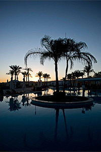 Travel photography or palm trees for holiday brochures