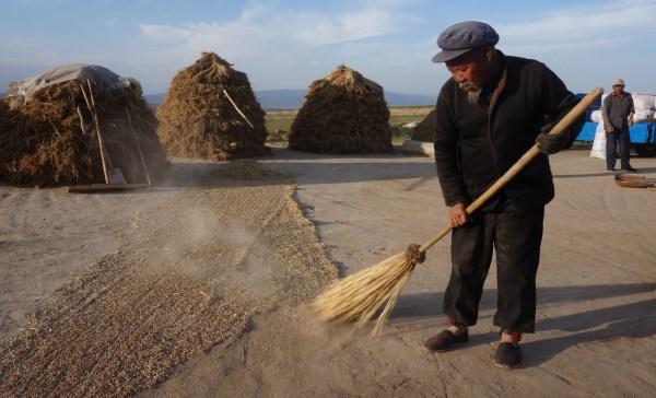 Old fellow winnowing grain in Jianshan Village, Gansu