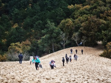 At the dune. Note the man not toiling up the sands. Those two girls at the front were lugging roller blades and crash hats up the dune so heaven only knows what they were going to do