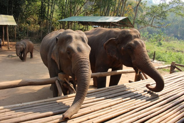 Three-elephants-Ethical-elephant-sanctuary-Chiang-Mai-Two-Souls-One-Path