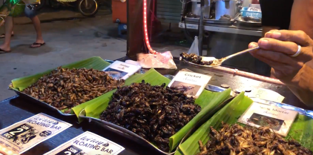 Try eating insects in Koh Phangan