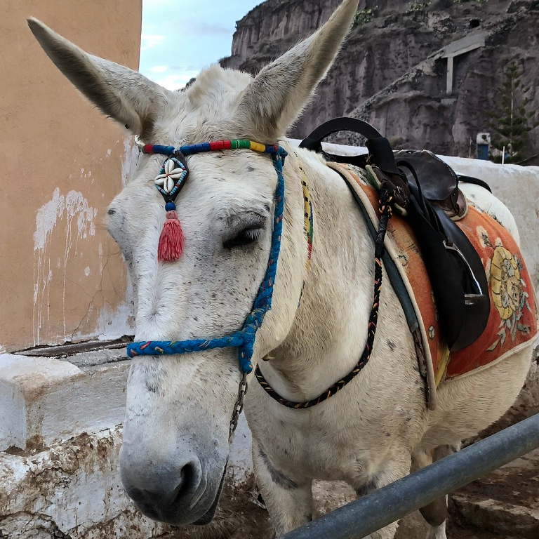 Off Peak Holiday Santorini Itinerary Travel Tips Fira Old Port Donkey Ride