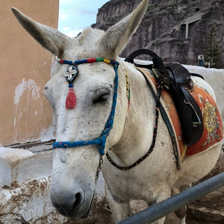 Off Peak Holiday Santorini Itinerary Travel Tips Fira Old Port Donkey Ride