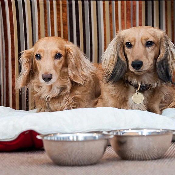 Dog friendly Hotel 41