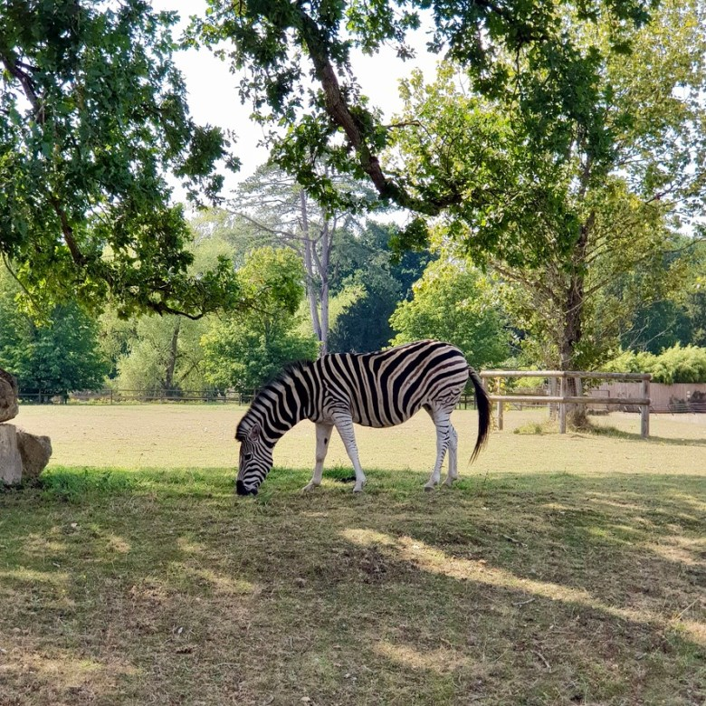 Cotswold Wildlife Park and Gardens Day Out Animals Farm Family Kids Dog Friendly Picnic Zebra Grazing