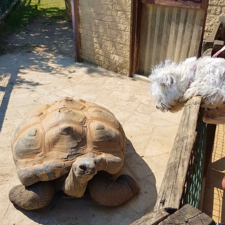 Cotswold Wildlife Park and Gardens Day Out Animals Farm Family Kids Dog Friendly Picnic Tortoise