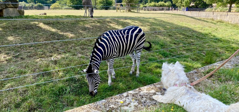 Cotswold Wildlife Park and Gardens Day Out Animals Farm Family Kids Dog Friendly Picnic