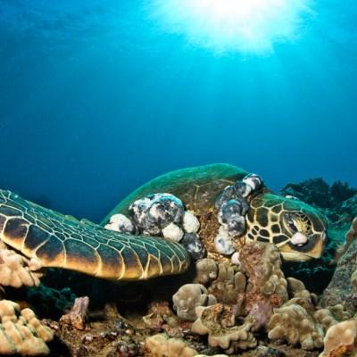 Turtle_Tumor