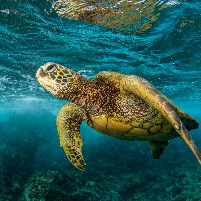 Colorful_Turtle