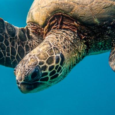 Turtle_CloseUp