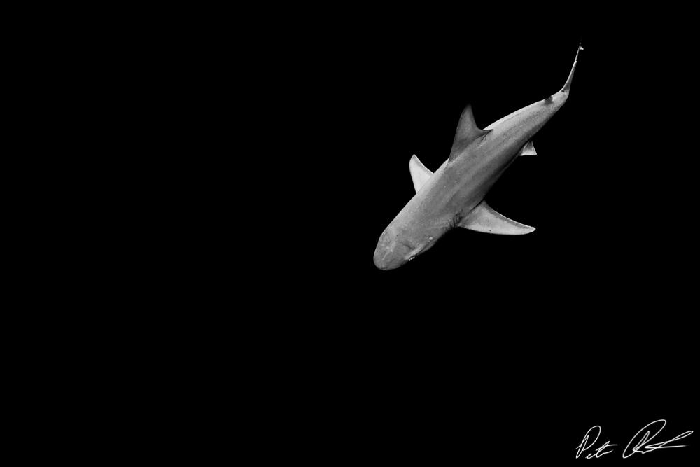 underwater photographers california