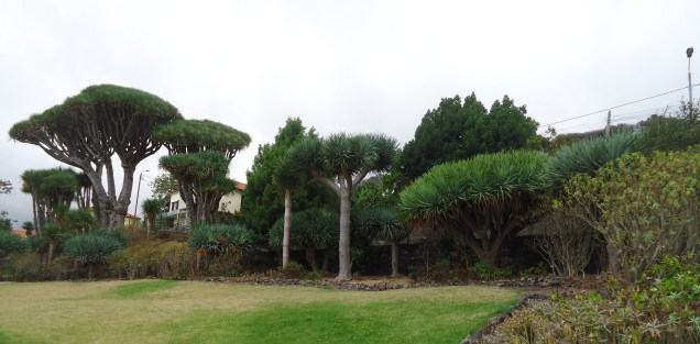Dragon Tree Reserve
