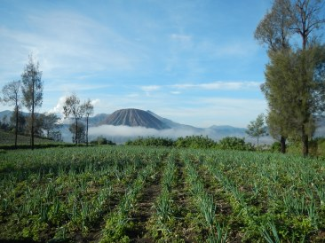 Fields in Cemoro Lawang overlooking Mount Batok
