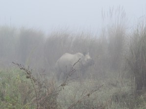 First rhino of the day
