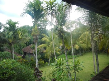 The view from the room in Bucu View