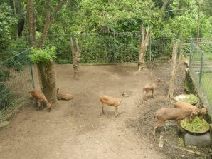 The deer in sad conditions in the Monkey Forest