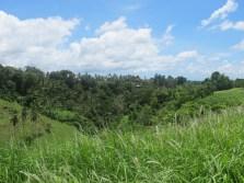 The walk around Ubud