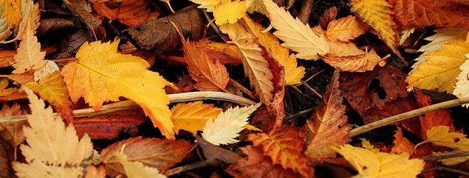 Rake Or Mulch Leaves