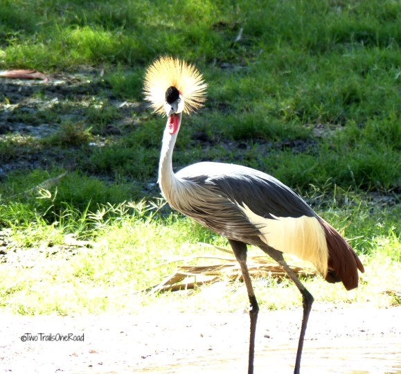 Zoo and AirShow April2016 191 - Copy