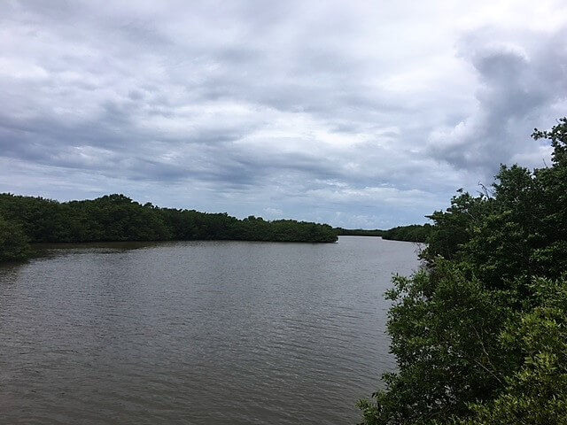 """A glimpse of the marsh area we passed on the walk to Bowman's Beach. - """"The Search for Sanibel Island Shells"""" - Two Traveling Texans"""