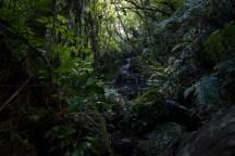 A bushwalk to a waterfall