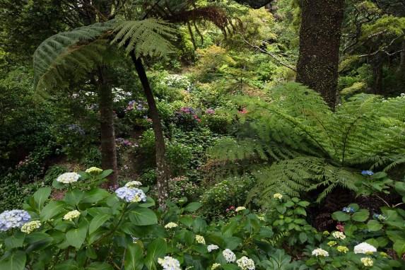 The Botanic Gardens of Wellington