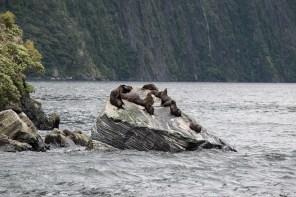 Sealion Rock