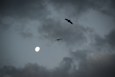 Every night Flying Foxes passed our balcony