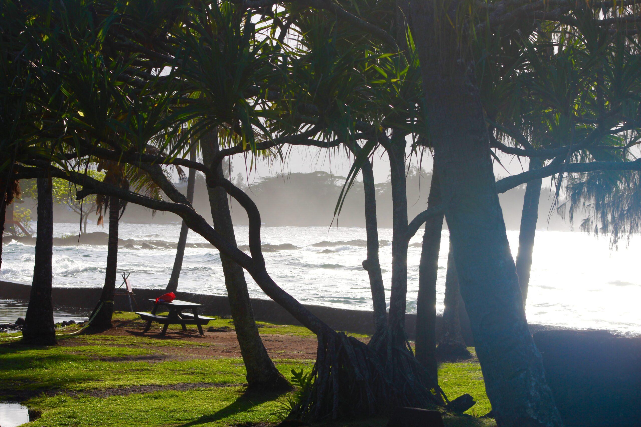 beach, picnic table, ball of yarn.