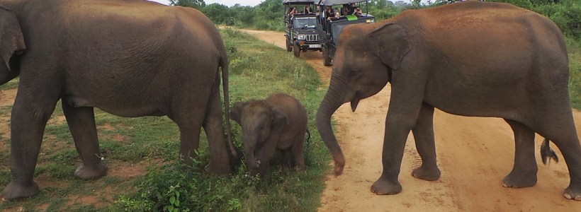 Sri Lanka Diaries: Seeing Elephants at Uda Walawe National Park