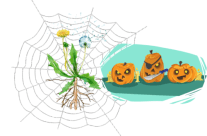Week of October 24-28: Not-so-Creepy Crawly Spiders!